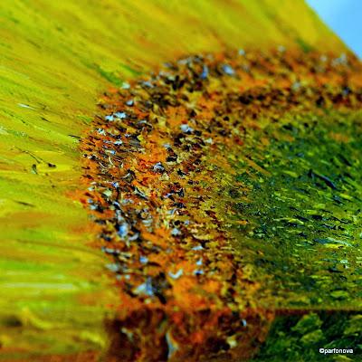 https://lh4.googleusercontent.com/-Mhls2W6HJRs/UqzPkta_NTI/AAAAAAAAJmA/K5-LCo3kYR4/s800-no/Sunshine+Sunflower+Fortune+%25281%2529.JPG