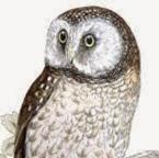 Alex Owl
