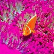 снится живая рыб