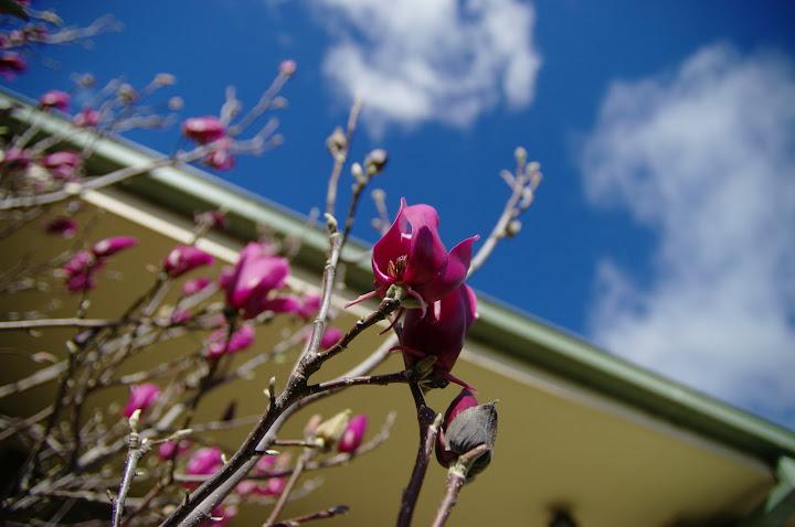 天氣好,天空藍,門前的花開朵朵紫:試拍新到手的DA*1650