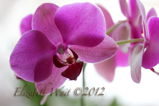 IMG_5424-2012-01-9-08-48.JPG