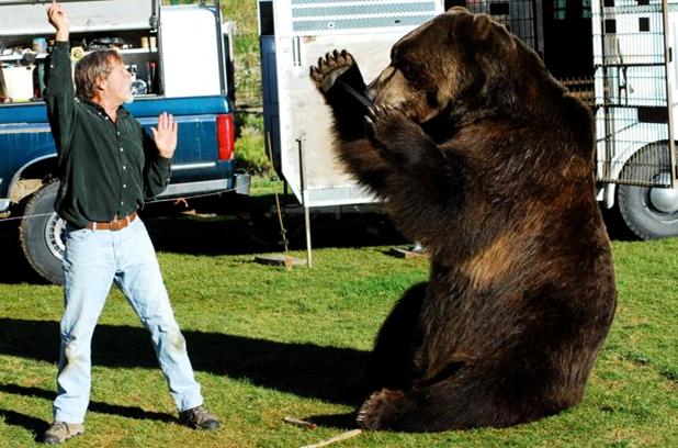 Urso pardo vs Urso polar - Página 2 Michaelflaherty