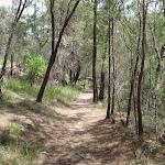 Continuing through the bush (116905)