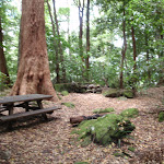 Leura Forest picnic benches (93208)