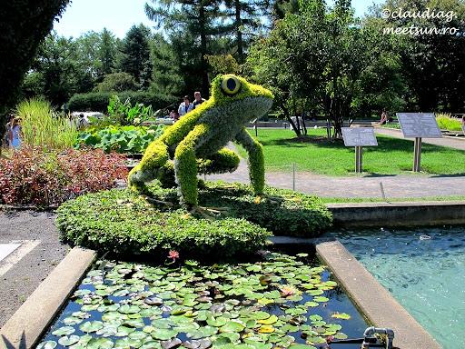 Broasca din plante #Mosaiculture