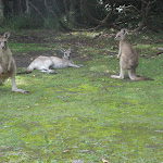 Say G'day to the locals