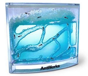 Kotak AntWorks: Trik Unik Cara Pelihara Semut Pekerja!