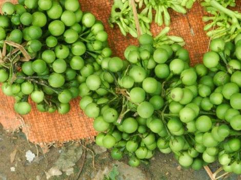 rau rung tay bac pys travel006 Rau rừng   Đặc sản vùng Tây Bắc