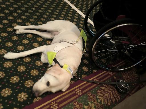 IBMセッションで会った盲導犬