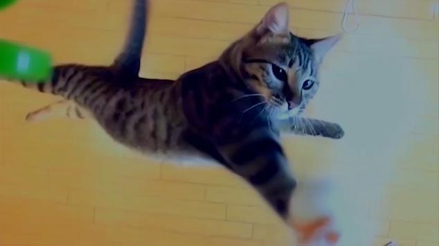 【動画】進撃のねこ 総集編Ver 「紅蓮の弓ニャ!」【進撃の巨人】