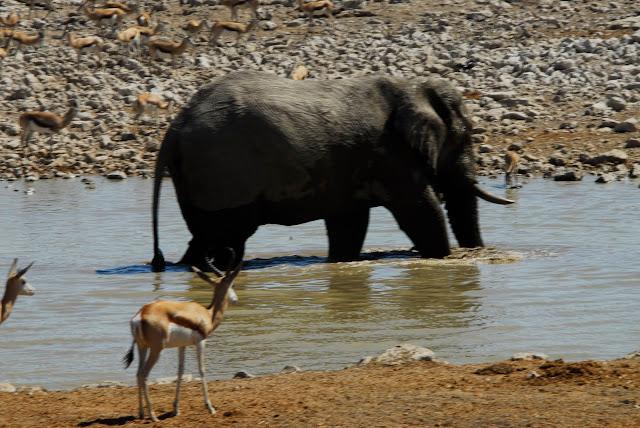 أفضل ما في أفريقيا  Best of Africa Namibia_180807120507