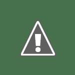 Pet London Designer Pet Accessories