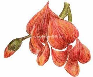 Easel and Bytes: March 2011