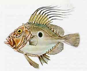 Aglio, Olio e Peperoncino: Italian fish & seafood names