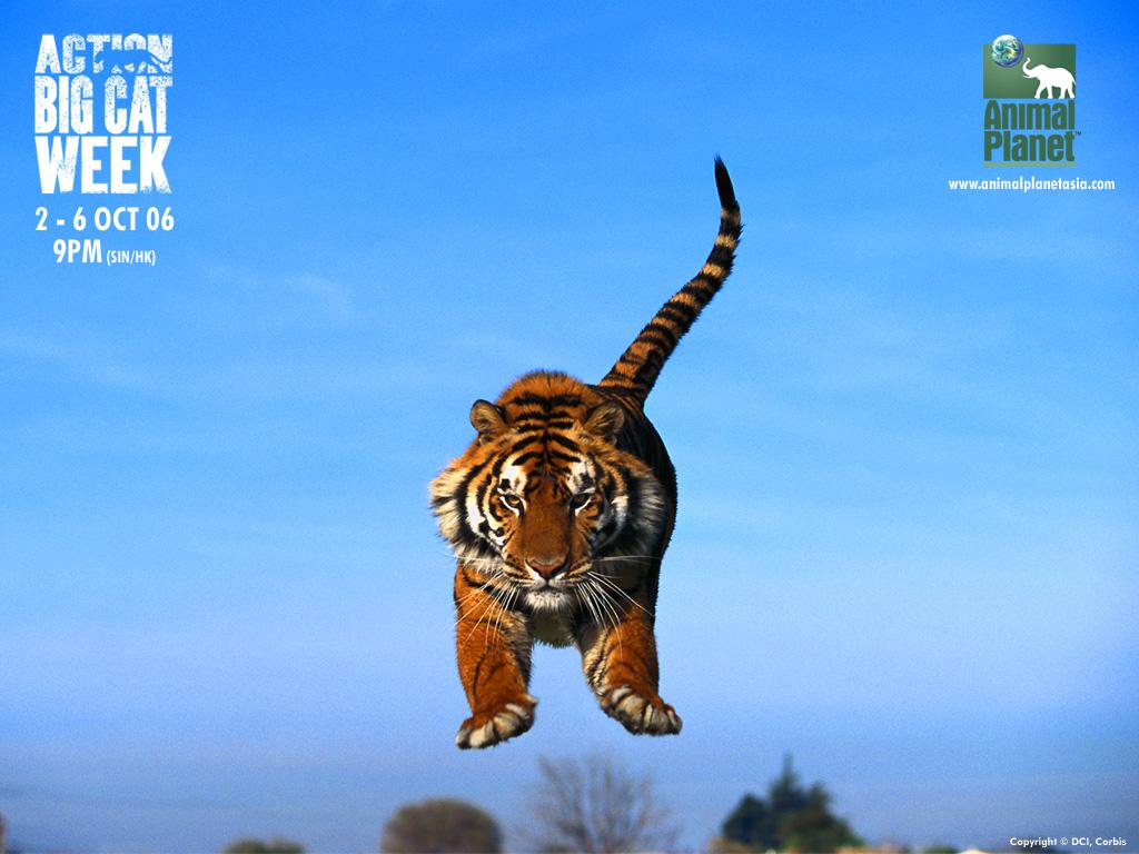 Aninimal Book: Free Amazing HD Wallpapers: Animal Planet wallpaper