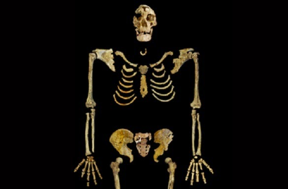 35,000-year-old skeleton to return to Egypt