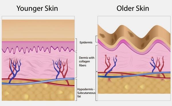 harga shaklee collagen powder Harga Shaklee Collagen Powder Amat Berbaloi!!! Aging and Deterioration of Collagen