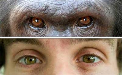 perbedaan mata simpanse dengan mata manusia