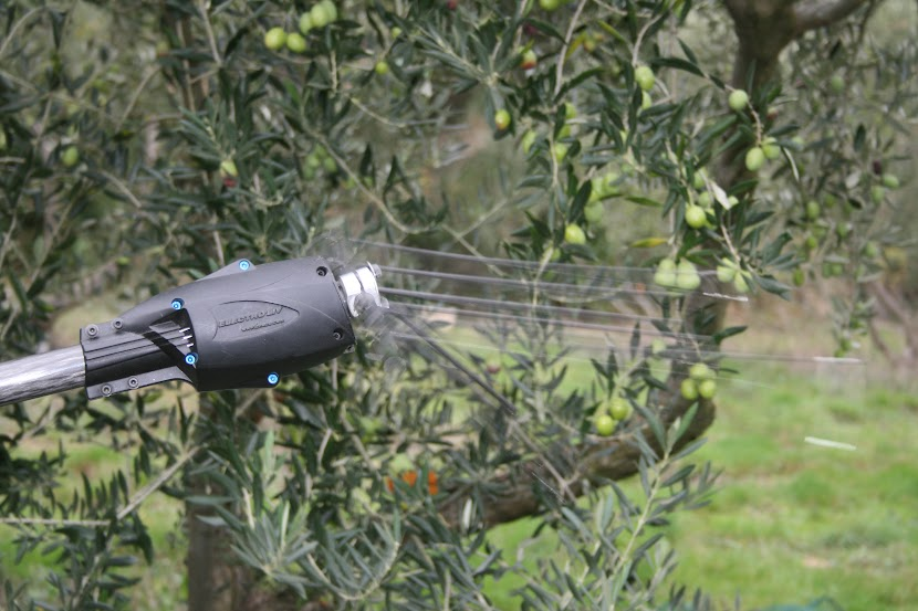 Infaco's electronic olive harvester - the Electro'liv