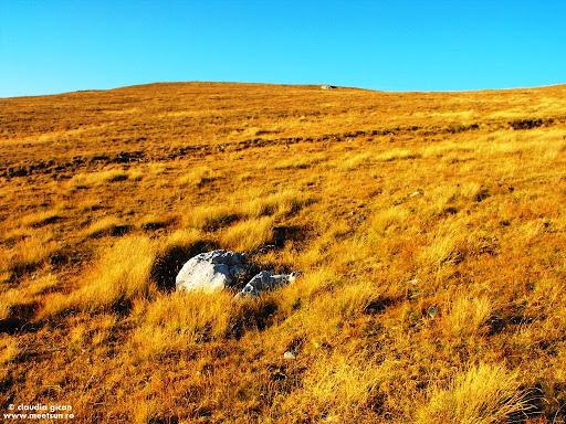 pietre şi iarbă