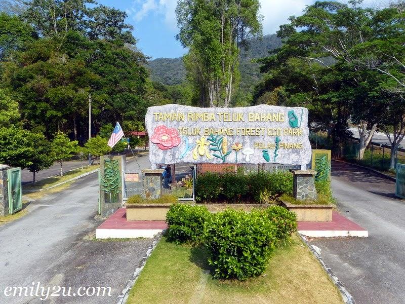 Taman Rimba Teluk Bahang Forest Eco Park