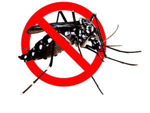 alat anti nyamuk sederhana - Cara memberantas nyamuk