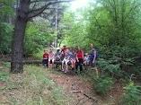 Вылазки в лес