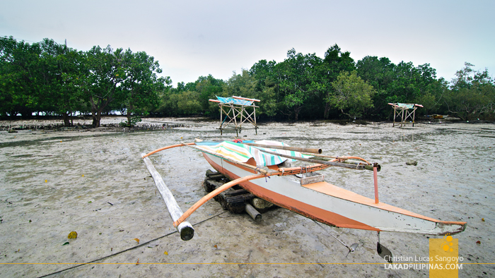 The Mangrove at the back of Mactan's Lapu-Lapu Shrine