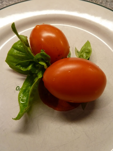 Home garden tomatoes Vienna Virginia