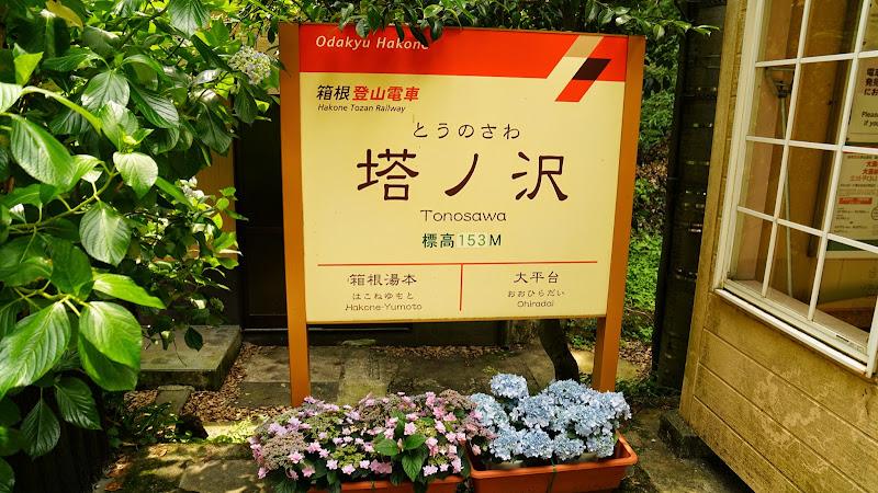 箱根 塔ノ沢 あじさい 写真1