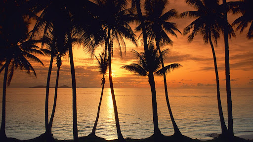 Swaying Palms at Sunset, Micronesia.jpg