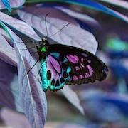 К чему снится бабочка?
