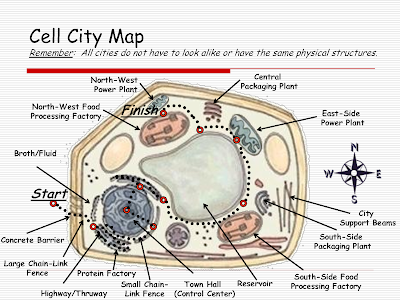 Cell City Assignment - David Bird Science