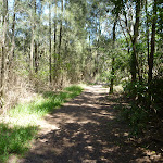 Casuarina forest north of Kitty Creek (345631)