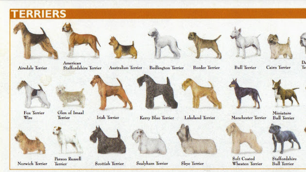 Toy Dog Breeds Pictures And Names : Toy dog breeds chart