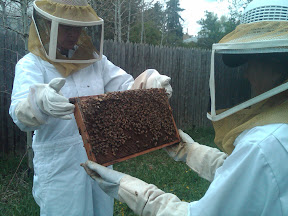 student bee keeping research