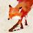 Dorian Rocher avatar image