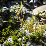 Moss growing on the Granite (282920)