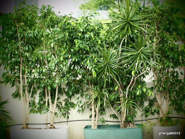 Julesvernehorticulture entretenir les plantes d int rieur for Les plantes d interieur