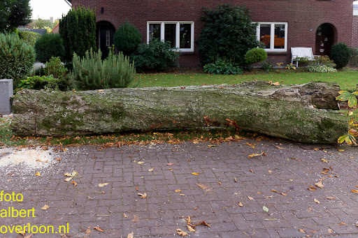 Bomen gekapt Museumlaan in overloon 20-10-2014 (35).jpg