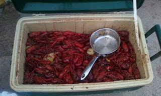 Crayfish, Mudbugs, Crawfish, Crawdads