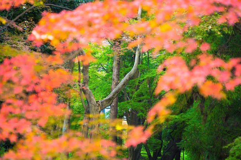 京都 紅葉 北野天満宮 写真6