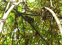 Our second lemur sighting: this time bamboo lemurs. And much more active than the first group we saw.