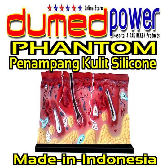 Alat-Peraga-Penampang-Kulit-Manusia-Silicone-DumedPower