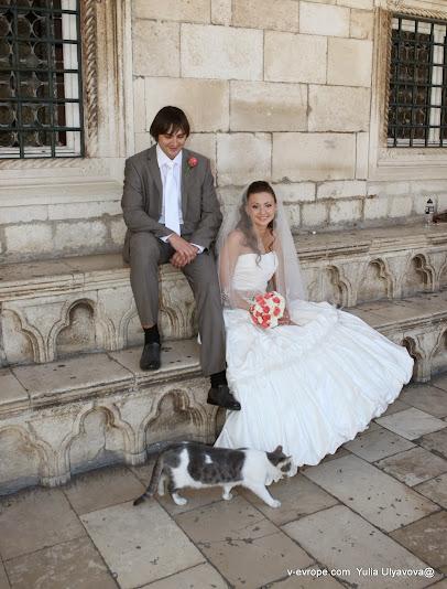 Кошка на свадьбе в Дубровнике