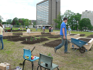 volunteers wheelbarrow donated soil to the raised beds