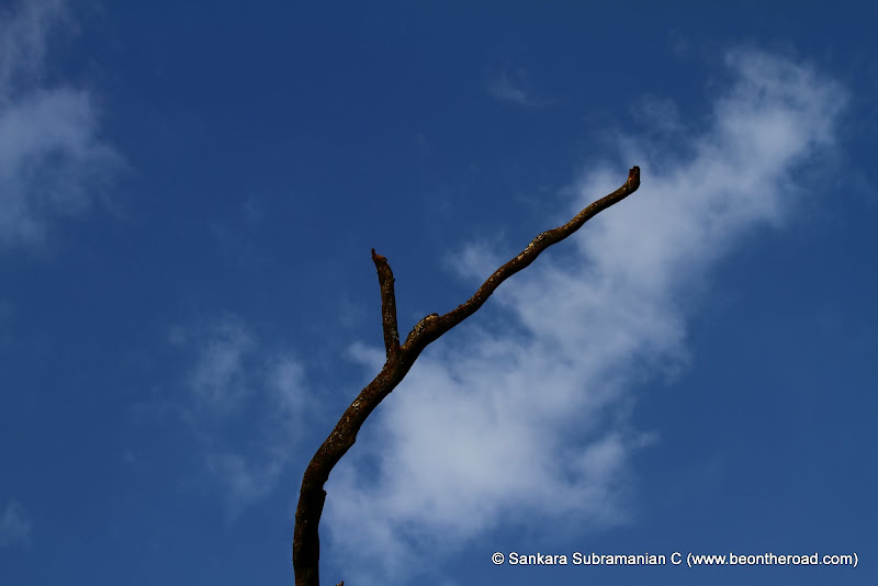 Solitary tree branch against a soft blue mountain sky