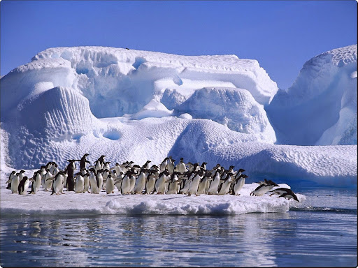 Adelie Penguins in Hope Bay, Antarctica.jpg
