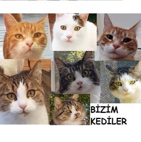 Bizim Kediler