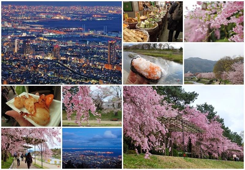京都 神戶 2013 櫻花見